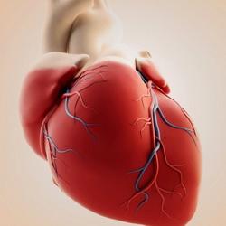 Замена клапанов сердца в Германии компания Рулаком